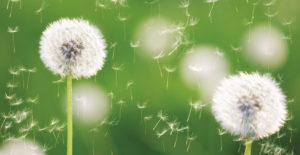 Bioresonance for allergies - Preparing for the allergy season